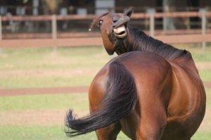 carzy horse